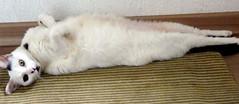 (Bia P) Tags: cats cute love animal animals cat gatos gato purr