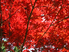 Primavera in Rosso di Acero (mbald60) Tags: red parco primavera foglie alberi canon colore natura albero rosso colori acero sigurt parcosigurt g10 canong10