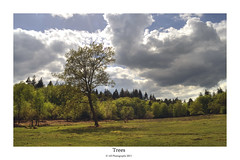 lone tree (AGB Photography) Tags: trees forest woodland landscape d5000
