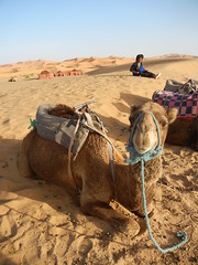 Merzouga 6 (luco*) Tags: sand desert dunes sable camel morocco maroc désert erg merzouga dromadaire chebbi flickraward flickraward5