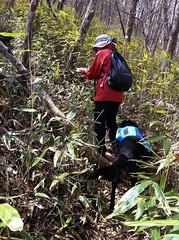 登山道からしばらくは背の高い笹藪が続く