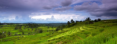 Panorama of rice terrace in Jatiluwih (tropicaLiving - Jessy Eykendorp) Tags: blue light sky bali green nature clouds canon indonesia landscape island photography eos daylight asia southeastasia rice terrace outdoor farm mount lee land filters ricefield volcanic 1022m