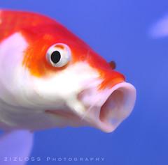 Back.. (ZiZLoSs) Tags: fish macro canon eos 7d usm f28 aziz ef100mmf28macrousm abdulaziz   ef100mm zizloss  3aziz canoneos7d almanie abdulazizalmanie httpzizlosscom