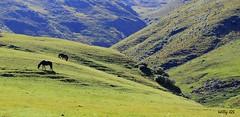 No podia dejar de fotear,,, (Willy GS) Tags: sky cloud naturaleza color nature argentina argentine colors canon landscape eos earth north paisaje colores cielo land nube salta norte tucuman tierra eos550d guillermosiemens