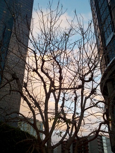 2011-01-30_17-17-39_939
