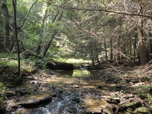 Brook Trout Stream