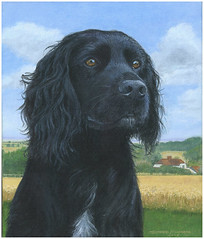 """Darcy - Acrylic on canvas • <a style=""""font-size:0.8em;"""" href=""""http://www.flickr.com/photos/64357681@N04/5866520825/"""" target=""""_blank"""">View on Flickr</a>"""
