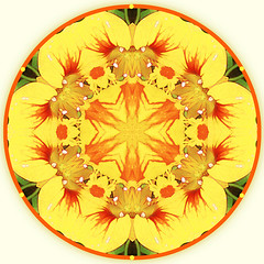 summer dance (SueO'Kieffe) Tags: nature digital photoshop mandala spirituality