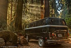 Beau Knows Westies (Silent G Photography) Tags: vw forest sunrise photography bigsur adobe redwood rays hdr highdynamicrange lightroom westphalia photomatix colorefexpro niksoftware nikond7000 nikkor1635mmf4 markgvazdinskas silentgphotography