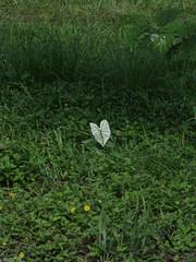 Barranco, Belize (The Advocacy Project) Tags: park project amy belize national oil bracken barranco drilling advocacy satiim sarstoon temash