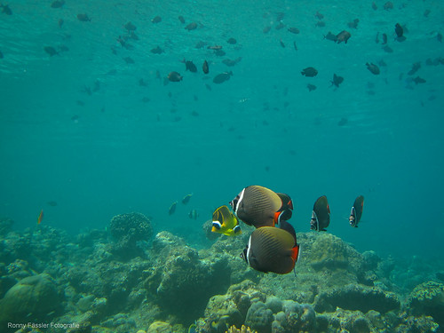 Malediven 2010 -0691