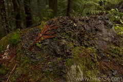 """Mossy Rock • <a style=""""font-size:0.8em;"""" href=""""http://www.flickr.com/photos/63501323@N07/5886718668/"""" target=""""_blank"""">View on Flickr</a>"""