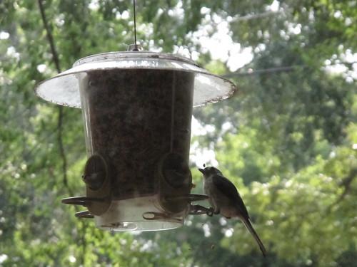 Birds 0323
