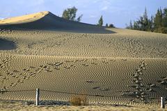 Nuestra cada vez más menguadas dunas