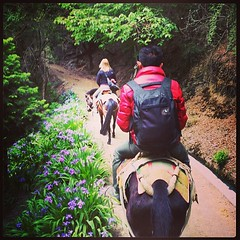 Climbing #Meili Snow Mountain... Horses with the assist! #shangrila #china