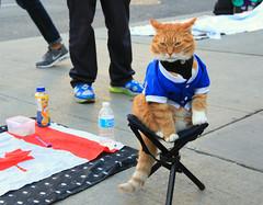 Homeless (Cindy's Here) Tags: homeless homelesscat cat yongedundas toronto ontario canada canon lookslike 116 44