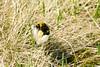 DSC_3380 (d90-fan) Tags: rauris raurisertal natur alpen salzburgerland österreich nationalpark npht hohe tauern wandern krumltal seidlwinkeltal
