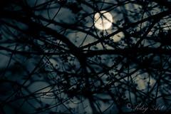 03-18 - Twilight zone-.jpg (MakroManiak II) Tags: night canon march twilight moonlight 365 shining 19th moonshine sidsy project365 55250 t2i march2011 supermoon march192011 makromaniak