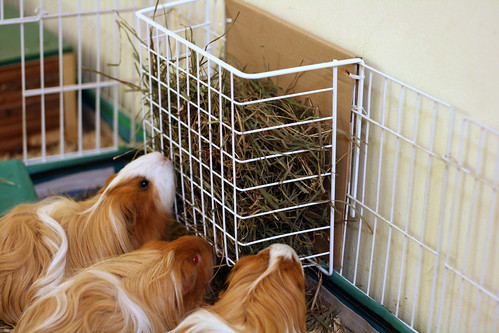 Under-Shelf Storage Basket used as Hay Feeder
