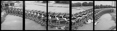 Dragon (efo) Tags: bw panorama shoppingcarts multiframe elcerritoplaza autaut olympuspens penorama efo:site=1 efo:site=6 efo:pick=1
