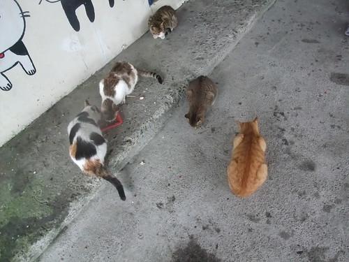 侯硐 猫村