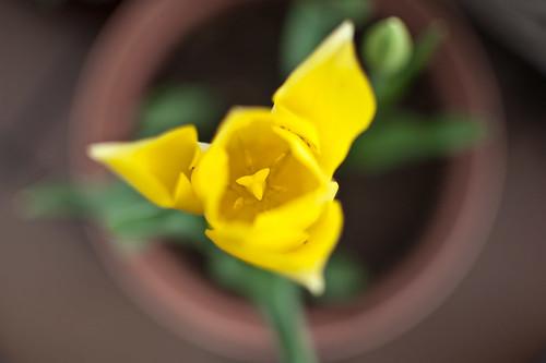214/365 Abril flores mil