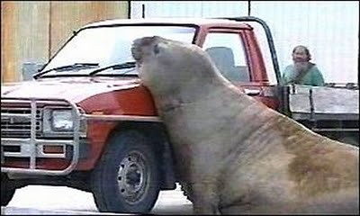 animals_attacking_cars_07