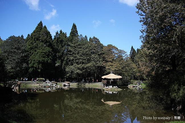 2011阿里山櫻花季晴天版22