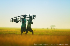 Farmers of the Farmland (Kamrul - Hasan) Tags: two people green living warm dusk farm return crops farmer bangladesh profession gettyimagesbangladeshq2