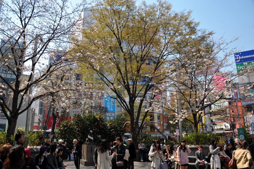 People waiting in front of Hachiko