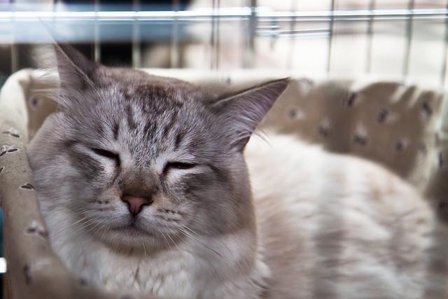 Katinas #2