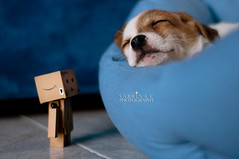 IN EXPLORE! [twenty-three] Wake up my new little friend!! (Sabrina C. Fotografie) Tags: two dog look cane puppy 50mm nikon sleep 10 sunday explore april doggy months aprile due guarda cucciolo domenica dorme danbo mesi d90 explored revoltech danboard