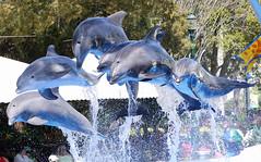 Six (CetusCetus) Tags: world show blue sea orlando florida dolphin dolphins bow fl finale seaworld shamu horizons bottlenose