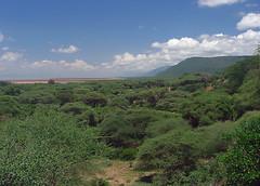 Escarpment, Lake Manyara National Park
