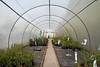 Greenhouse (!.Keesssss.!) Tags: plant netherlands sign horizontal photography vanishingpoint day arch nopeople safety indoors growth greenhouse straight agriculture footpath protection gettyimages gelderland royaltyfree colorimage theflickrcollection keessmans 172ksgetty