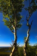 Two poplars (Rick Gravelle) Tags: trees sky nikond70 berryhill poplars grosmornenationalpark berryhillcampground