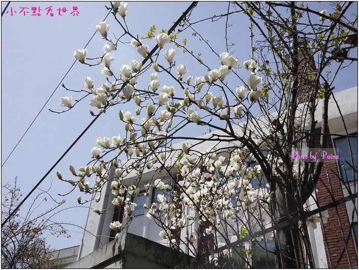 合井皇甫的店(弘大) (9).jpg