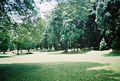 (yttria.ariwahjoedi) Tags: plant tree green film nature grass analog landscape nikon superia meadow 200 raya bogor kebun fujicolor af230