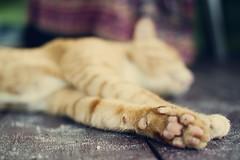 21.4.11 (obo-bobolina) Tags: thailand kohphangan haadsalad cat kitty april 2011 365 roject365