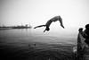 flipping mad! #1 (lomokev) Tags: sea summer blackandwhite bw danger canon eos pier blackwhite dangerous brighton diving acrobatics 5d bandw brightonpier palacepier backflip canoneos5d deletetag file:name=110423eos5d5491 roll:name=110423eos5d