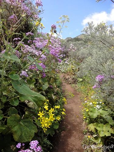Ruta de los Tajinastes - Gran Canaria