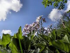 Summer days in spring 4/9