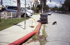 Watch where you stray (QsySue) Tags: street red dog house dumpster corner graffiti tag neighborhood drain sidewalk firehydrant 35mmfilm curb rialto expiredfilm aos inlandempire sanbernardinocounty colorfilm 35mmcamera konicaefp2 titleisacalexicolyric mitsubishimxiiicolorfilm rebrandedkonica
