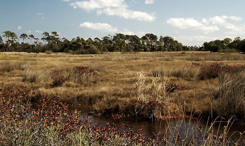 Merritt Island NWR Landscape 2