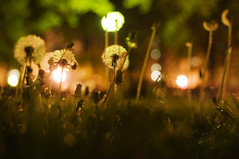 dandelions of the urban jungle (maria jpeg) Tags: washingtondc imf urbanjungle worldbank dandelions statusquo