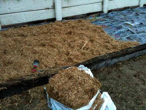 First 2 layers = newspaper (soaked) + sugarcane mulch
