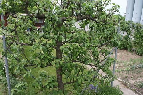 basel garden 014