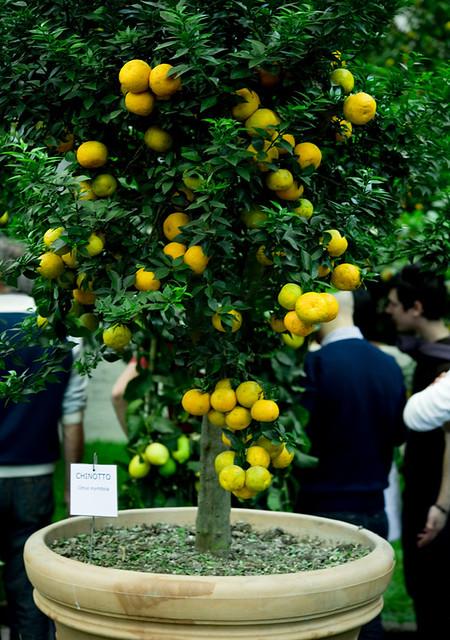 Цветочная выставка в Генуе 24