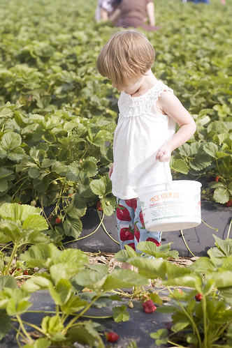 strawberry pickin'_0003