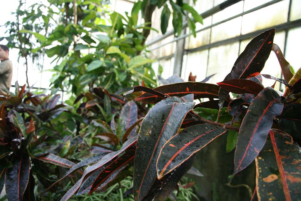 The world 39 s most recently posted photos by ragarego for Vendita piante da frutto tropicali